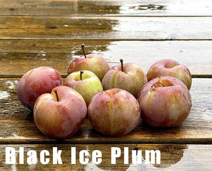 Black Ice Plum
