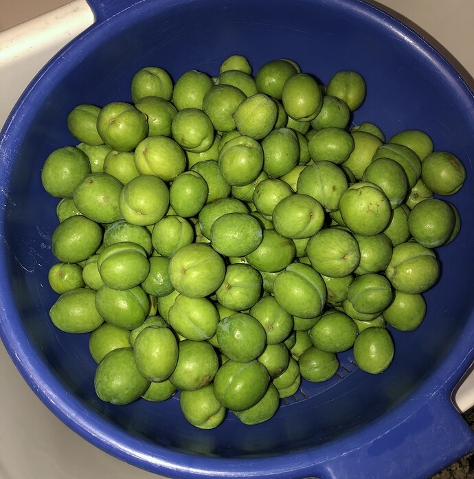 2021-05-06_Green_Plums_IMG_0821