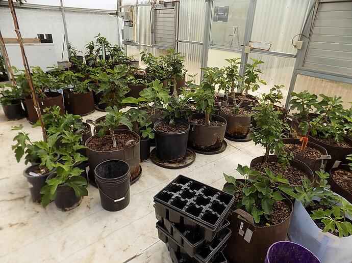 greenhouse 4 6 21 003
