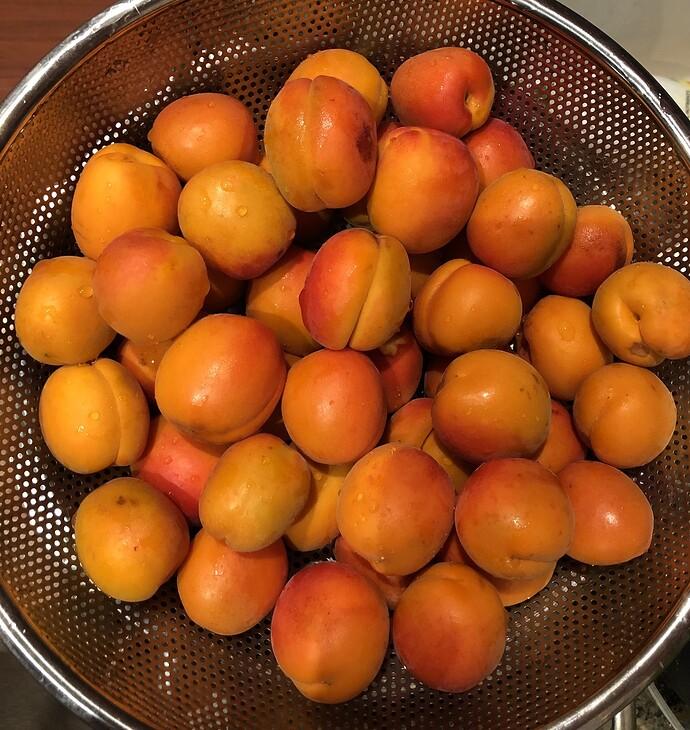 2021-05-24_Harvest_Apricot_Tomcot_IMG_0832