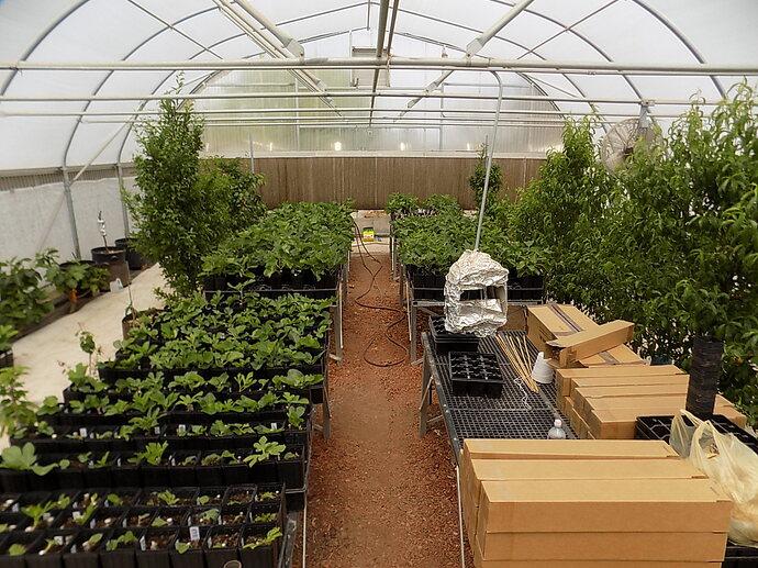 greenhouse 4 6 21 012