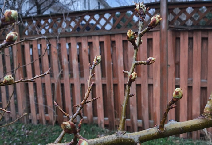 Pears 06-25-21