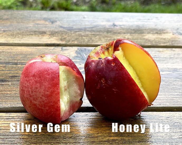 Silver Gem and Honey Lite
