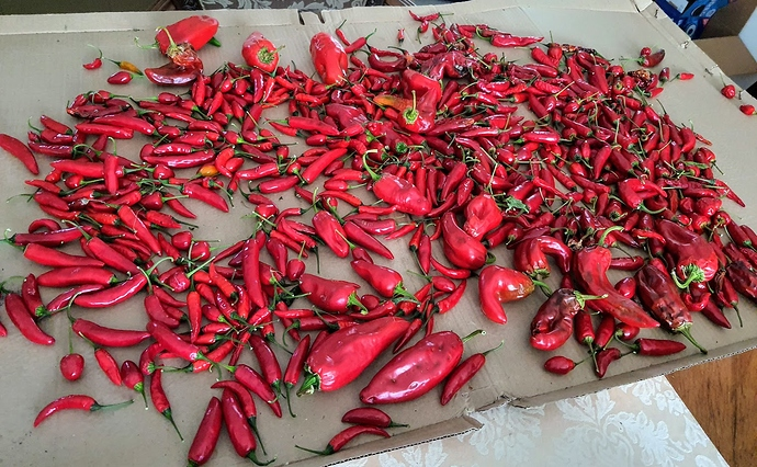 Peppers%2009-21-2020