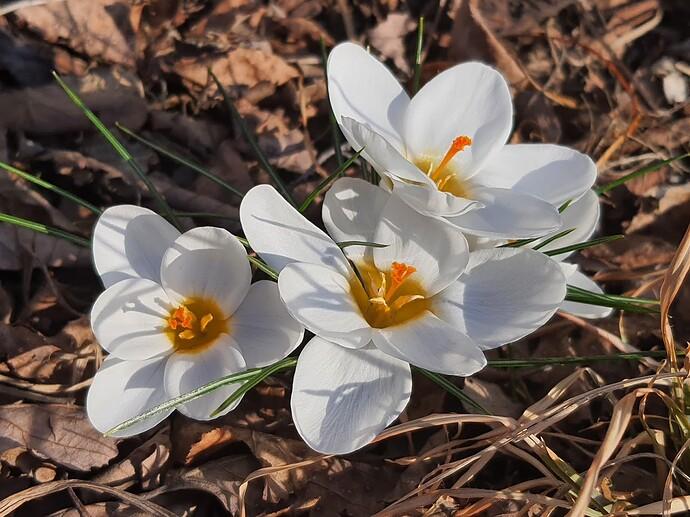 Flowers 4 3-15-21