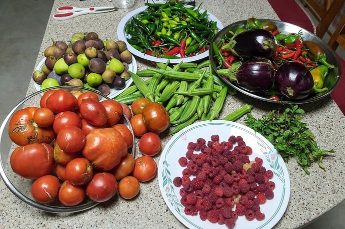 Harvest%2009-12-20%201