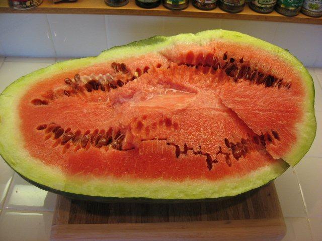 Illiniwek%20Red%20Seeded%20Watermelon